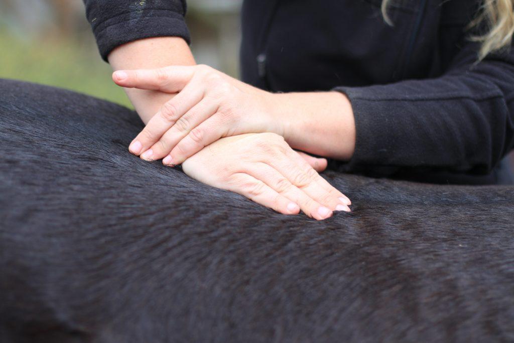 Green Glen Equine Hospital Equine Chiropractic Services