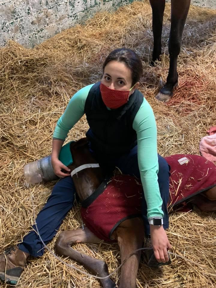Equine Hospitalization