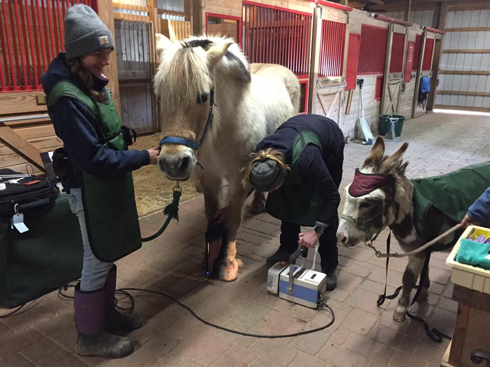 Equine Portable Imaging